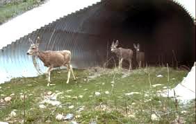 Travessia subterrânea pára animais no Canadá.