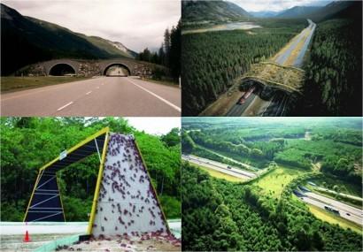 A Holanda é o país que mais investe em pontes e passagens subterrâneas para animais.