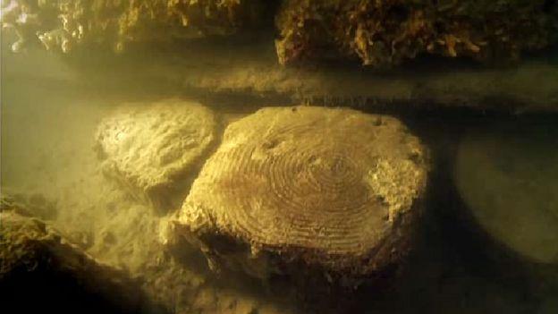 Com o tempo, os troncos de madeira se petrificaram