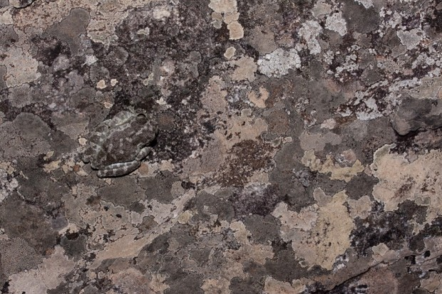 vidas-rupestres-4-conexao-planeta.jpg.pagespeed.ce.rSqFfuPmG9