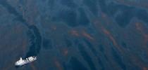 Golfo do México - vazamento de petróleo ameaça várias espécies animais.
