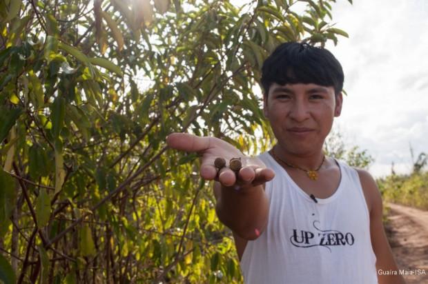 Oreme Marlus Ikpeng na aldeia Moygu, do povo Ikpeng, apresenta sementes de Mengkwa/Yaru (Mamoninha)|Guaíra Maia-ISA
